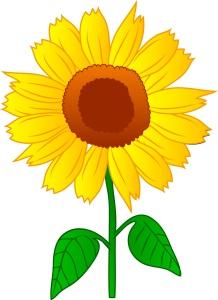 sunflower-clipart-sunflower_2